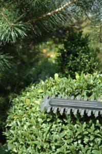 azur-elagage-entretien-espaces-verts (36)