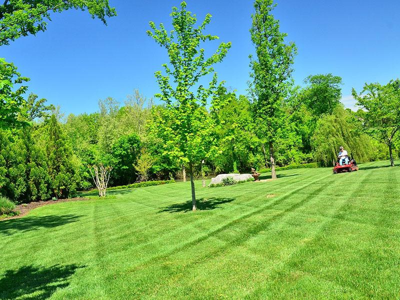 azur-elagage-entretien-espaces-verts-(39)
